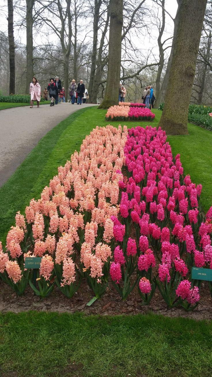 Jardines de tulipanes en keukenhof holanda s lo abren un for Jardines de abril