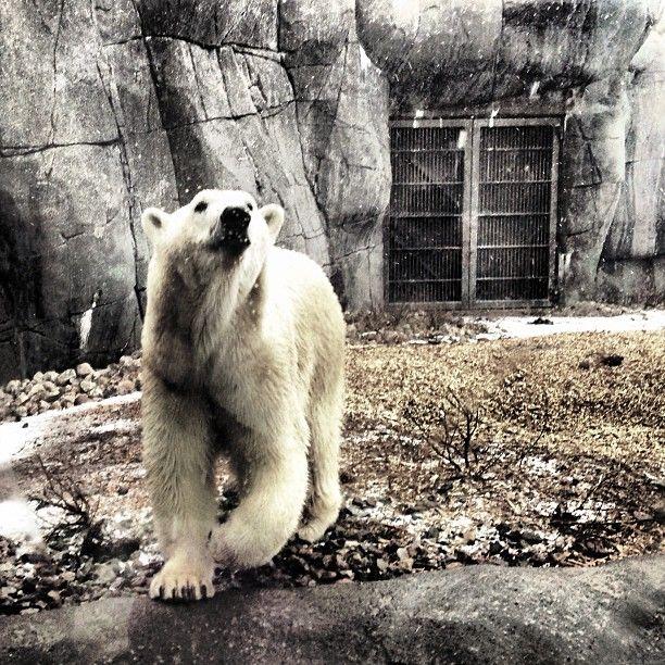 Zoologisk Have (Copenhagen Zoo)