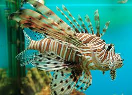 Las 25 mejores ideas sobre peces para pecera en pinterest for Peces de agua dulce para peceras