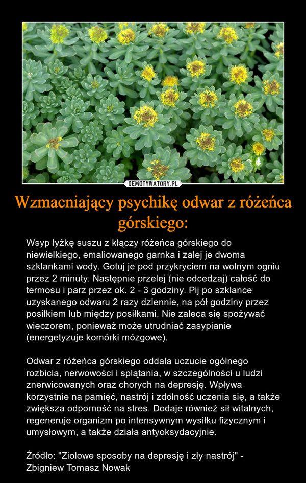 Odwar Z Korzeni Rozenca Gorskiego In 2020 Herbalism Herbs