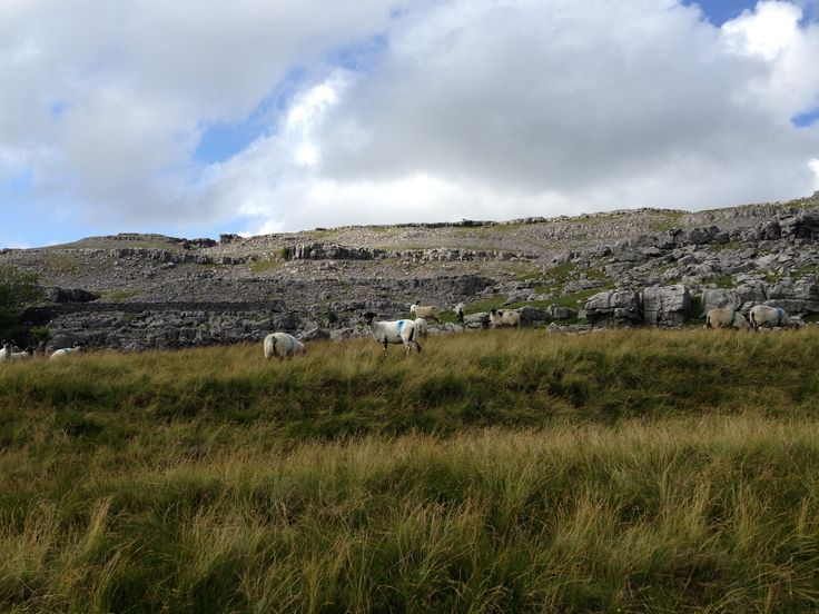 How lucky are these sheep? They live up Ingleborough!