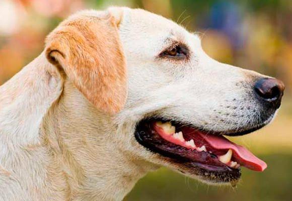 Higiene bucal em cães e gatos Fique atento ao seu.