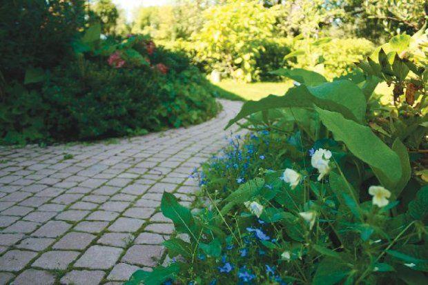 Nawierzchnie z kostek betonowych - trwałe, łatwe do ułożenia i stosunkowo niedrogie - na dobre zagościły w naszych ogrodach. A jeszcze do niedawna szare lub czerwone kostki skutecznie zniechęcały niektórych do ich kupna.