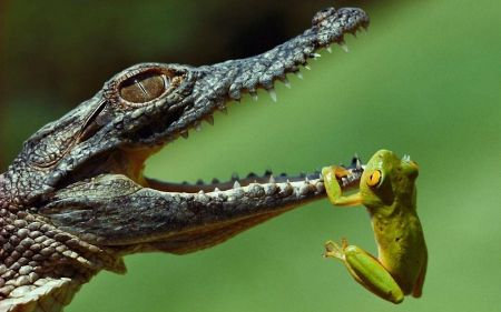 Can we be friends? *** - Frogs Wallpaper ID 1192044 - Desktop Nexus Animals