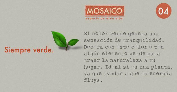 decoración y buena energía, plantas para tu apartamento. www.proyectomosaico.com