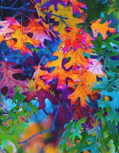 155 Best Images About Pretty Leaves On Pinterest Water