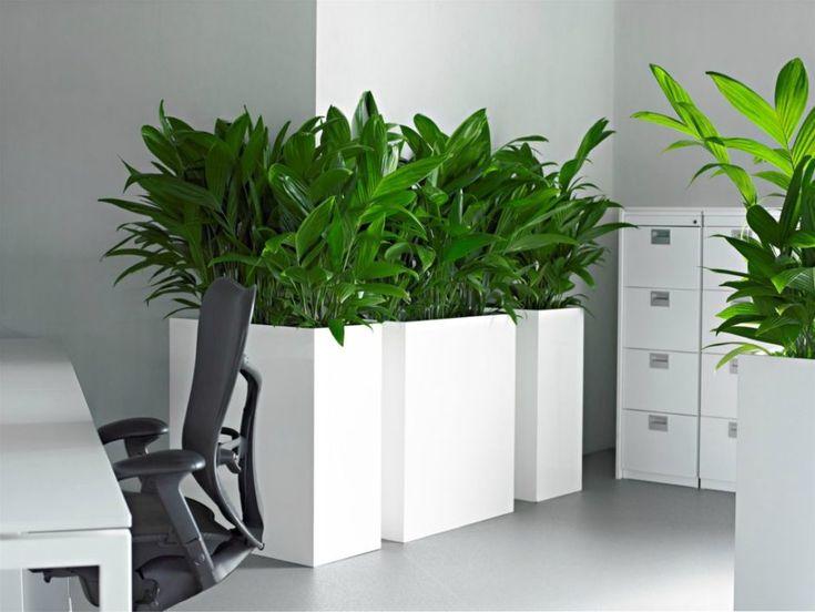 Цветы для офиса, виды, описание и уход - фото примеров ...