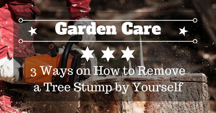 how to kill tree stumps and roots