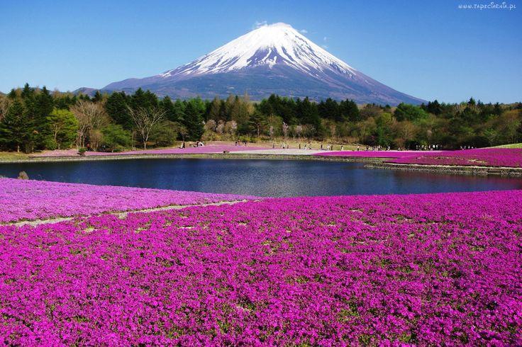 Wulkan, Dywan, Kwiatowy, Japonia