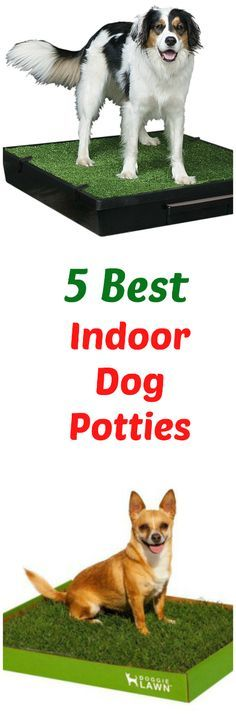 Great Small Indoor Dogs