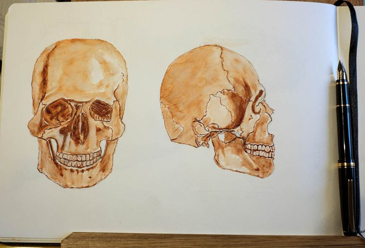 Human skull drawn with a Namiki Falcon fountain pen and waterbrush