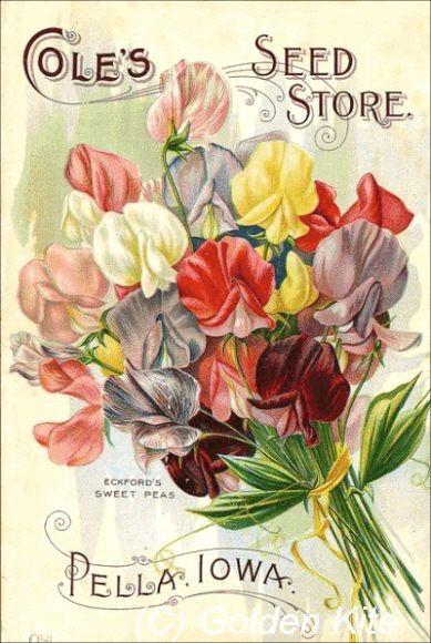 Coles catálogo de semillas