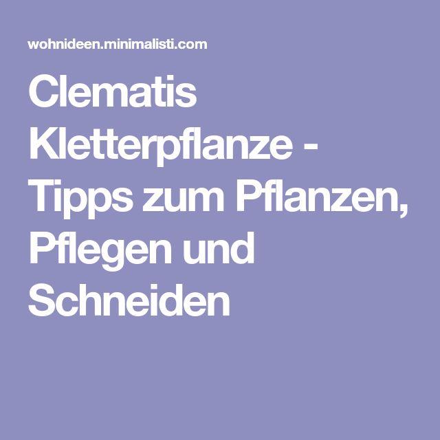clematis kletterpflanze tipps zum pflanzen pflegen und schneiden garten pinterest. Black Bedroom Furniture Sets. Home Design Ideas