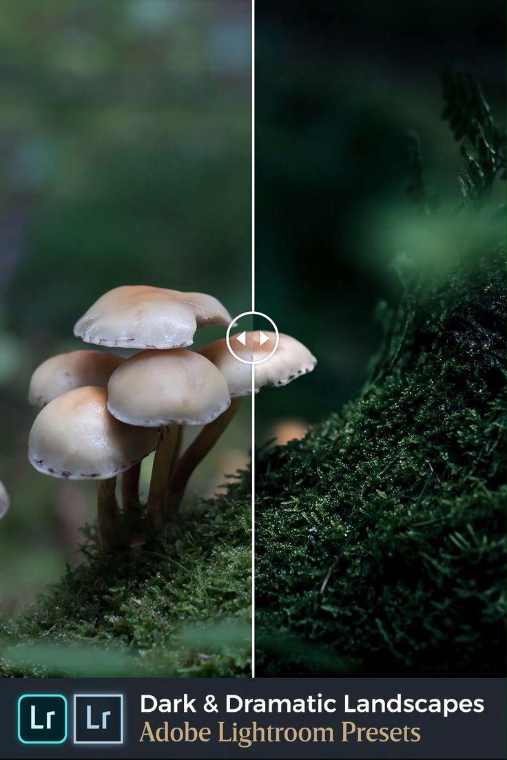 Die Vorliebe der Lightroom-Natur für dunkle und dramatische Fotografie