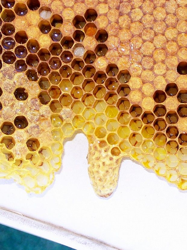 The buzziest ingredient you haven't heard of...  royal jelly
