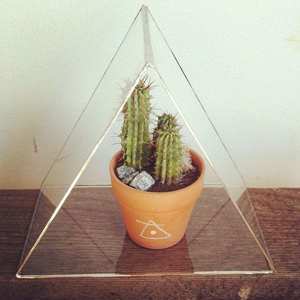 Everyone needs a cactus house!