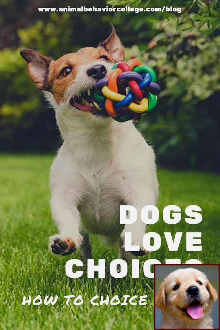 1 Have Dog Behavior Problems Learn About Dog Behavior Quizzes And