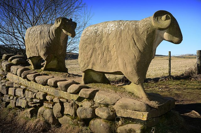This sculpture of two sheep was made in 2002 by local artist, Keith Alexander. They stand on a dry-stone wall over-looking Low Force, near Bowlees in Teesdale. Carved below the sheep are the words 'A wonderful place to be - a walker'. Teesdale is one of the picturesque Durham Dales in the Pennines in North East England. Once a lead mining hub, now treasured by amblers.