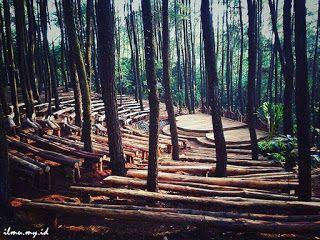 Cerita Inspirasi : Sekolah Hutan Kejora - IMYID