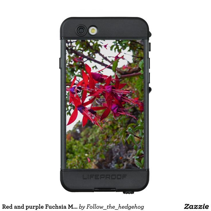 Red and purple Fuchsia Magellanica LifeProof NÜÜD iPhone 6s Case Red and purple Fuchsia Magellanica. Hummingbird Fuchsia or Hardy Fuchsia is a species of flowering plant in the Evening Primrose family, native to Patagonia. The picture was taken in Ushuaia, Argentina