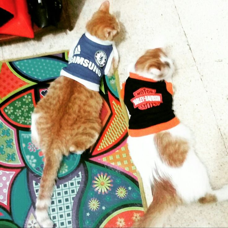 I❤🐈  #catslovers #cutecat #ILoveMyCats