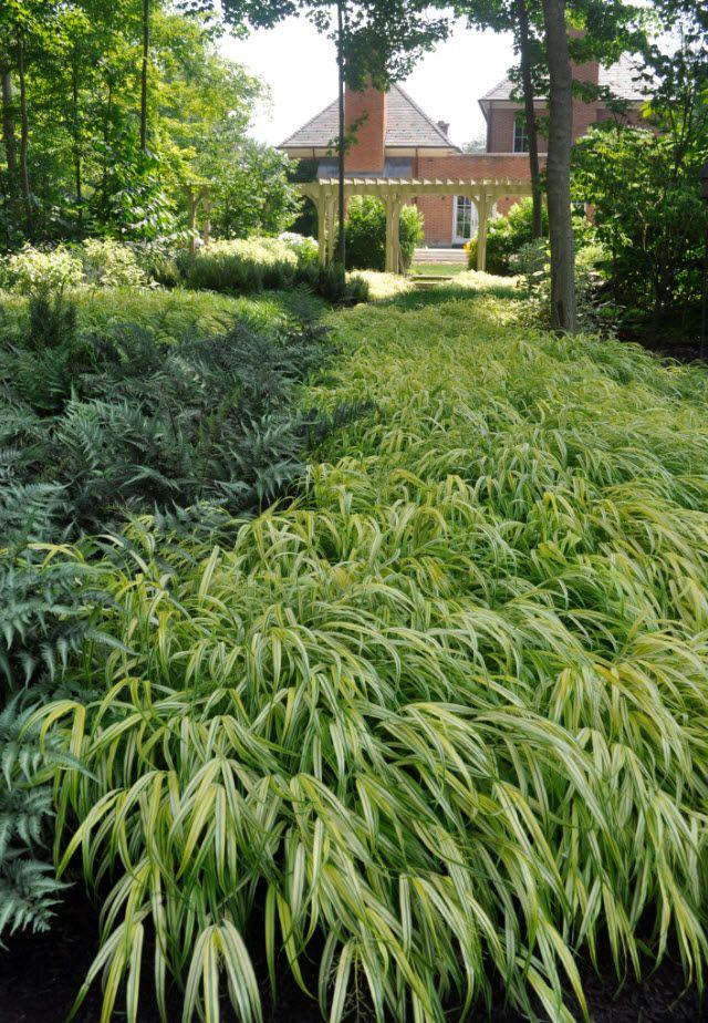 Hakonechloa macra 'Aureola' and jap painted fern Kurt Bluemel - Horticultural Royalty Remembered -Thinking Outside the Boxwood,