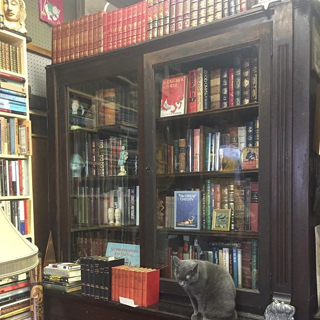 Fine bindings, rare first editions & Charlotte. What better way to pass a lazy afternoon? #bookstore #bookstagram #nashville #sylvanpark #📚 #catstagram