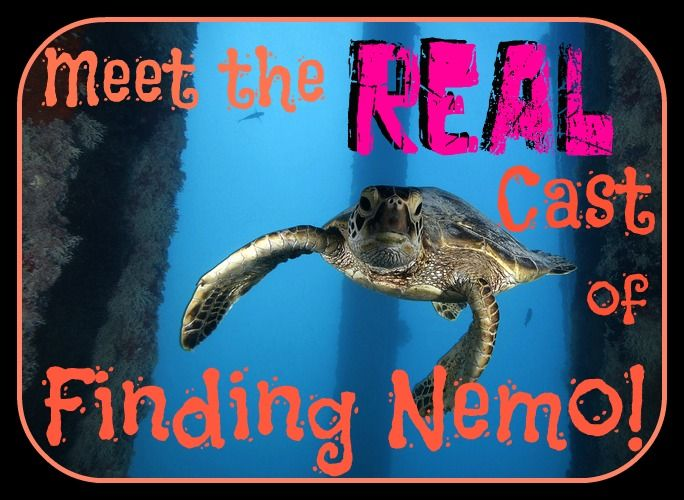 Finding Nemo is a favorite of kids and adults from all over the world, but have you ever seen who the characters actually are in real life? Check out our sneak peek! http://aquaviews.net/explore-the-blue/meet-real-cast-finding-nemo/