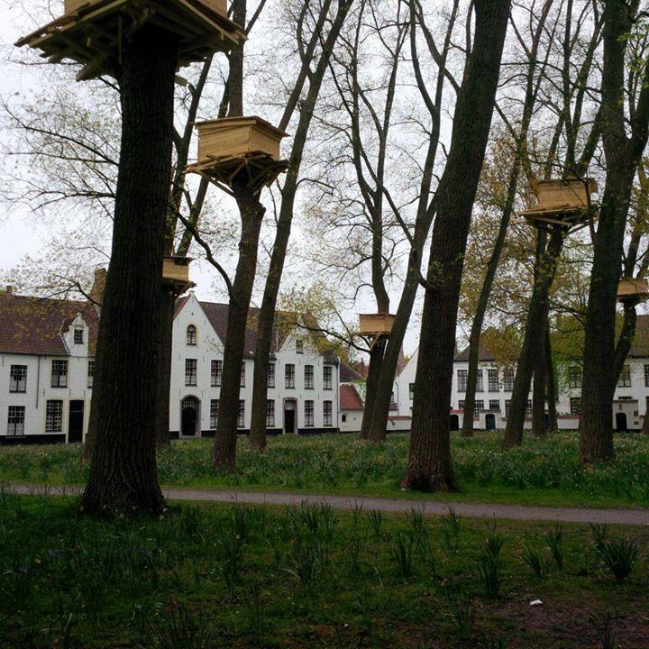 Begijnhof -