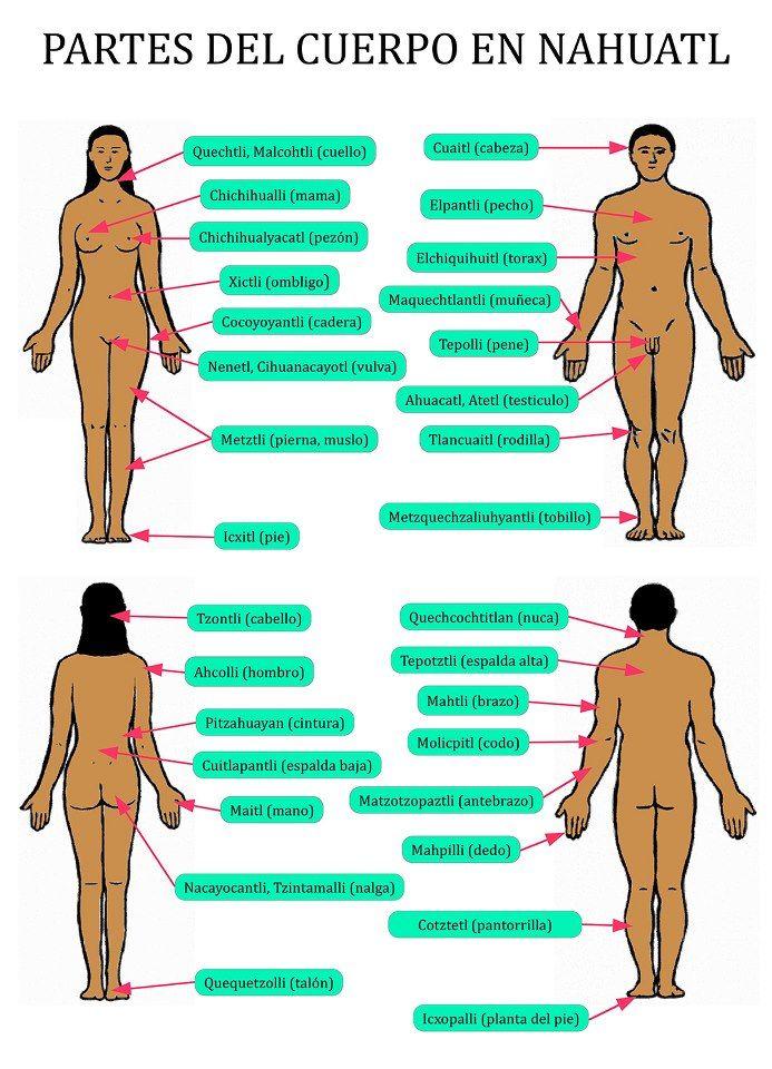 Partes del cuerpo en Náhuatl