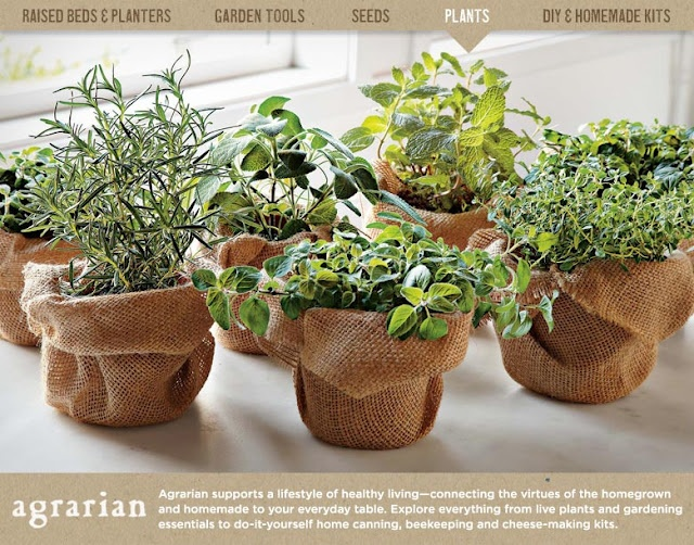 Potted Herb Garden Gift | Home Design