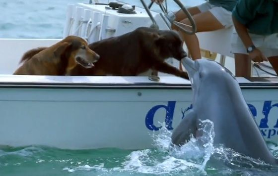 Dolphin kissing dog!: A Kiss, Akiss, Animal Friendship, Dogs, Best Friends, Dolphins, Funny Animal, Photo, New Friends