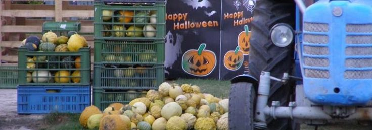 Hunting down a jack-o-lantern | Prague.TV Tips for Trips: Prague and Czech Republic | Prague Business Directory from Prague.TV