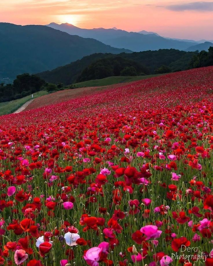 Fotografiaartistica Fotografiacreativa Fotografiapaisaje Fotografiatumblr Fotografiaurba With Images Nature Photography Flowers Flowers Photography Nature Photography