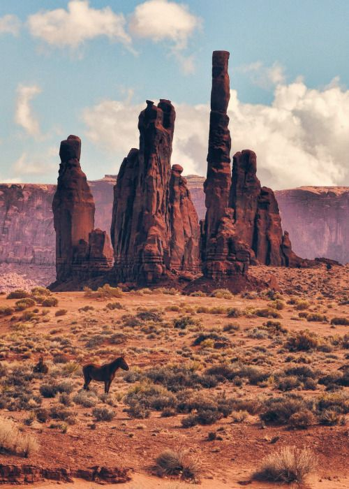 """endlessme: """"  Lone Horse in Monument Valley  Jeff Clow """""""