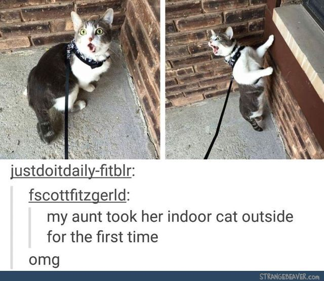This is exactly how Pounce reacted the first time I took him outside. Now it's a chore to get him to come back in! http://ibeebz.com