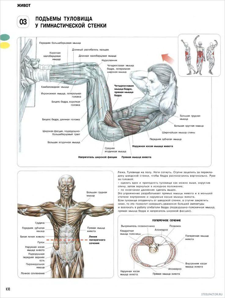 3. Подъемы туловища у гимнастической стенки