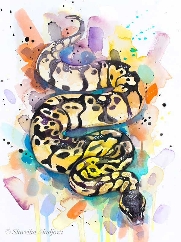 Pastel Ball Python Snake Watercolor Painting Print By Slaveika
