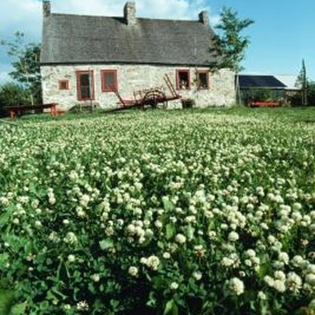 How To Get Rid Of Clover In Lawn Naturally