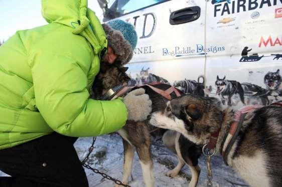 Uno de los ayudantes del conductor Cody Strathe prepara a los perros para la carrera antes de la sal... - Externa