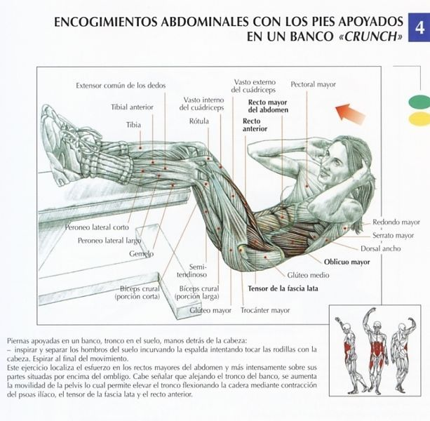 encogiminetos-abdominales-pies-apoyados-banco-crunch