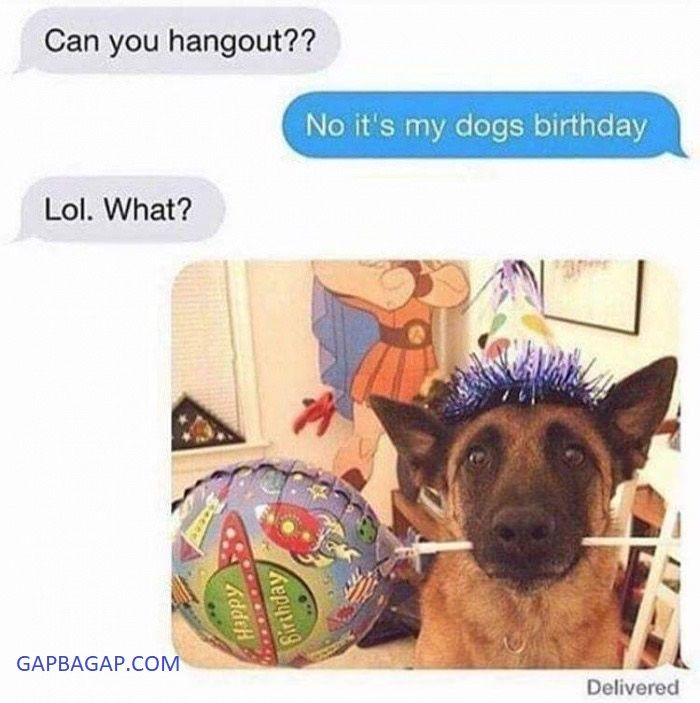 #Funny Text About A Dog vs. Birthday