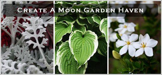 Moongarden ideas