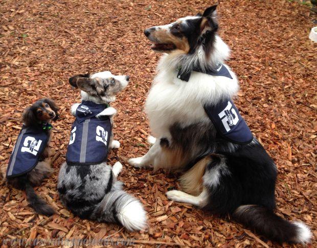 The 12th Dogs: miniature dachshund Wilhelm, cardigan welsh corgi Brychwyn and rough collie Huxley