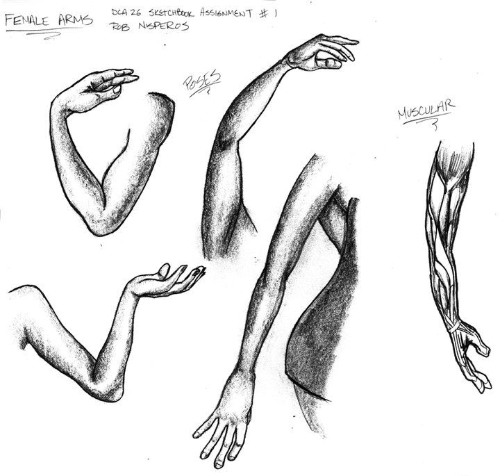 231 best Drawing Arms images on Pinterest | Arms, Sketches and ...