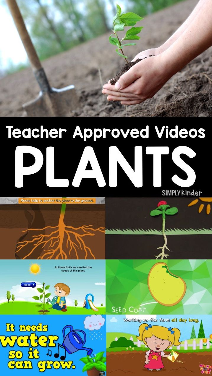 Teacher Approved Video List all about Plants. Everything from the life cycle of plants to how to plant them! Perfect for preschool, kindergarten, and first grade students.