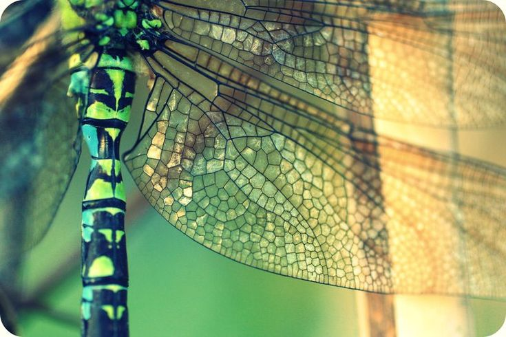 Eyes Of A Dragonfly Nature Dew Cute Macro Hd Wallpaper: 17 Best Images About Dragonfly On Pinterest