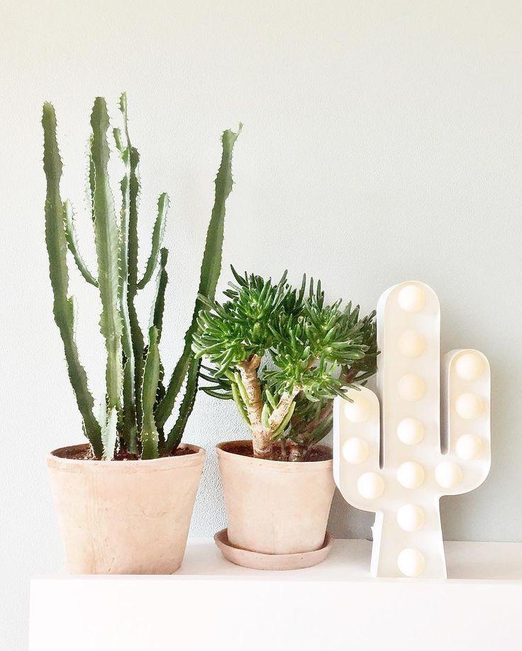Cactussen zijn niet weg te denken uit ieders interieur. Dit hoeft niet alleen in de vorm van een plantje te zijn. Nu ook als lamp bij HEMA! #HEMAwonen #cactus