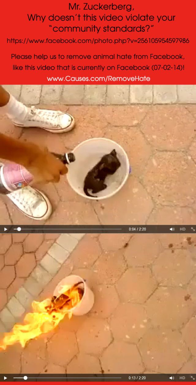 Facebook video of kitten roasted alive... Please sign and share!