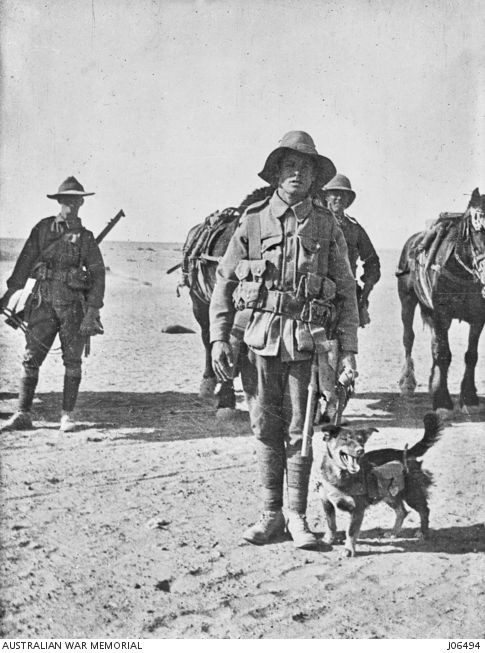 Members of the Australian 13th Battalion with a dog captured from the Turks in the Aghyl Dere valley on the Gallipoli Peninsula and named 'Joe Bourke'. Note the small satchel strapped to the dog.